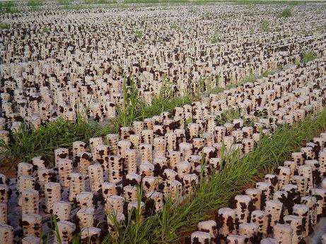 携手农民 促进和谐发展 山西凯龙农业科技有限公司